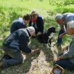 pechalifour-truffle